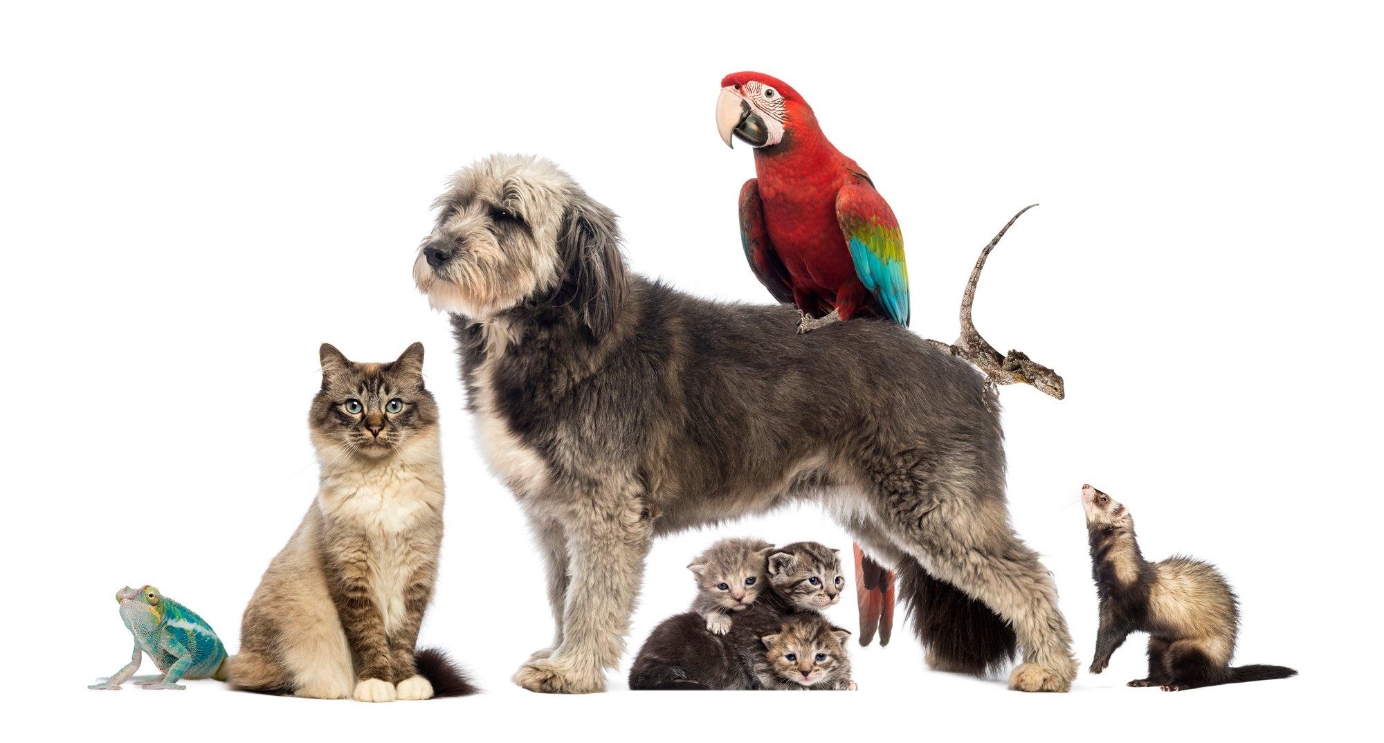 Group of pets,Group of pets - Dog, cat, bird, reptile, rabbit