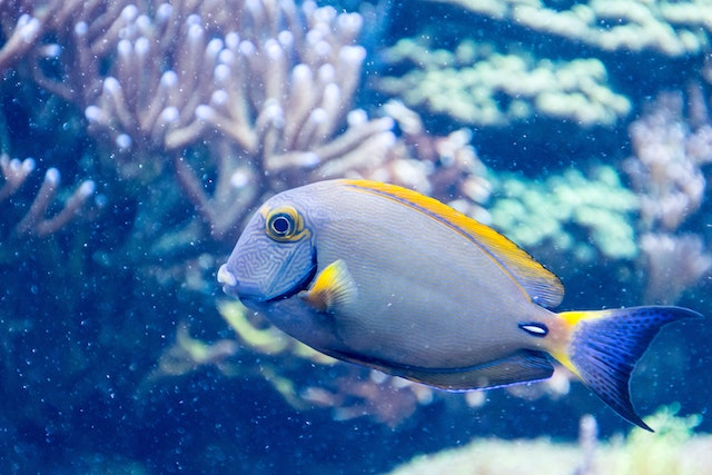 fish-water-tank-aquarium-fun